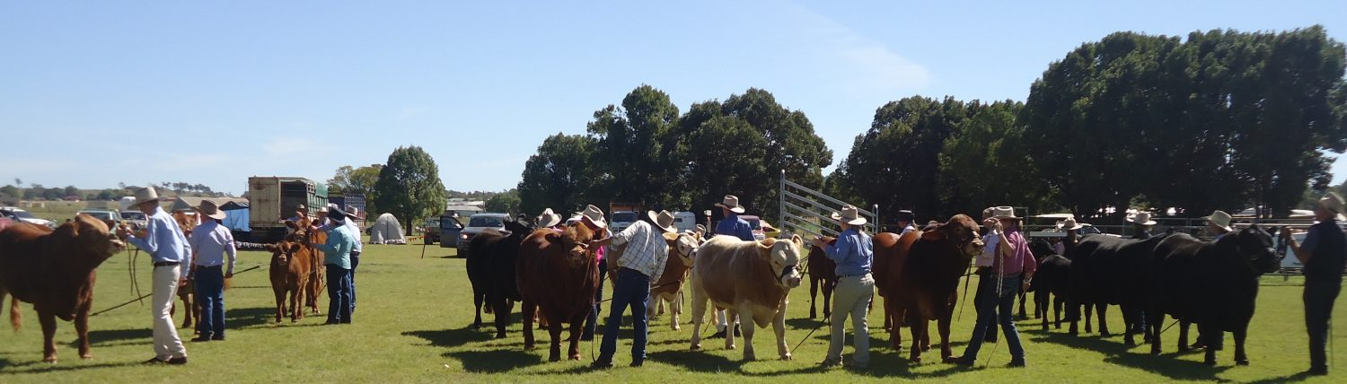 Kingaroy Show Society Inc